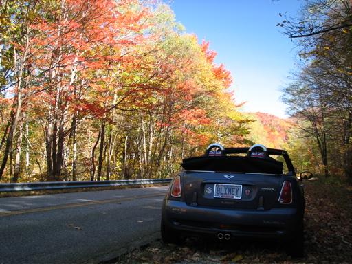 blimeyfoliage1.jpg